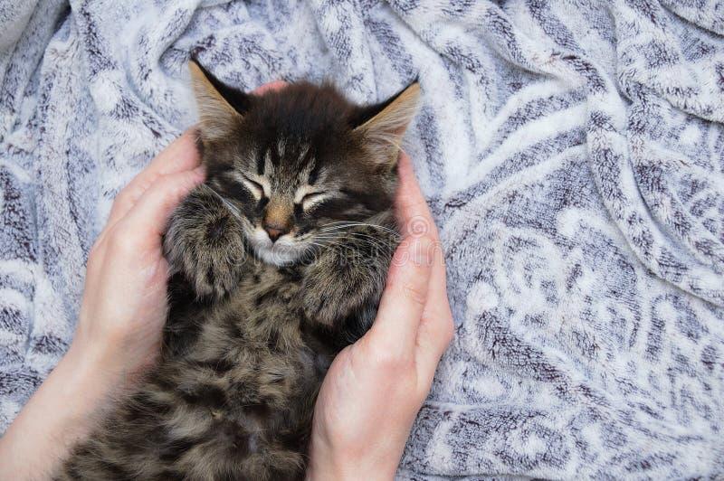 一点小猫在灰色格子花呢披肩在一个白种人女孩的手上睡觉 o 库存图片