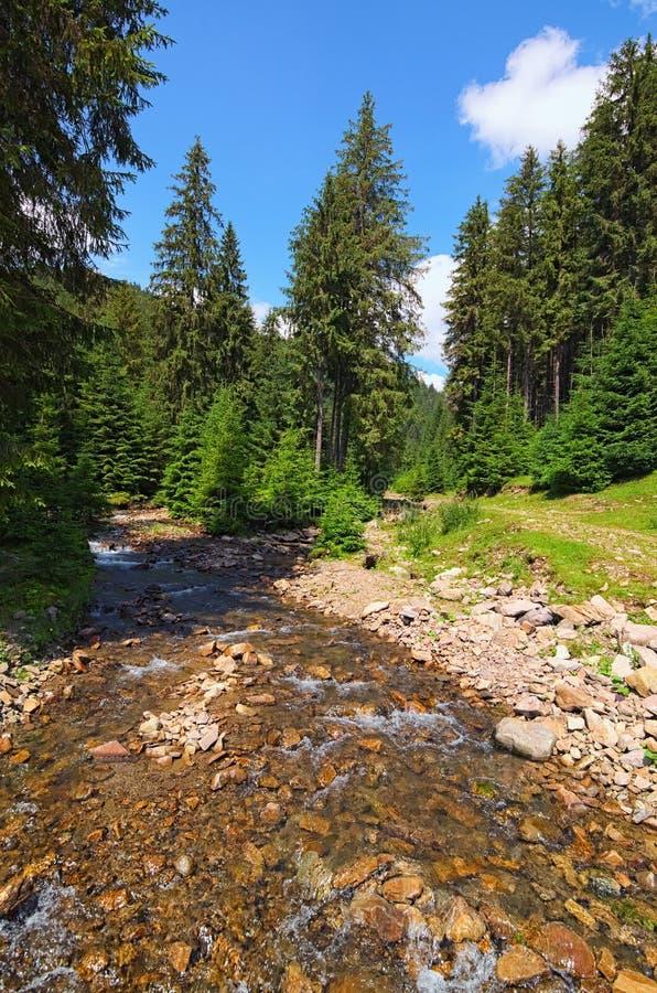 一点山快速的小河通过森林和河森林不可思议的风景有岩石的 夏天风景照片 库存照片