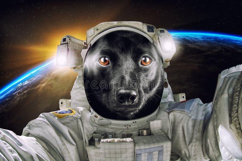 一点探索宇宙的逗人喜爱的画象沮丧宇航员或宇航员 库存图片
