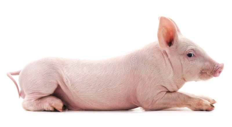 一点桃红色猪 免版税图库摄影