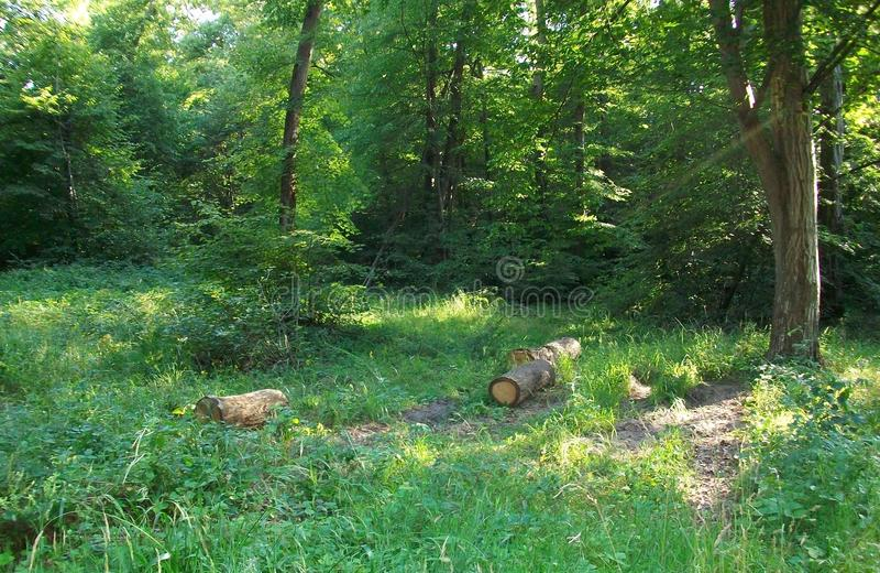 一点法国木头 库存照片