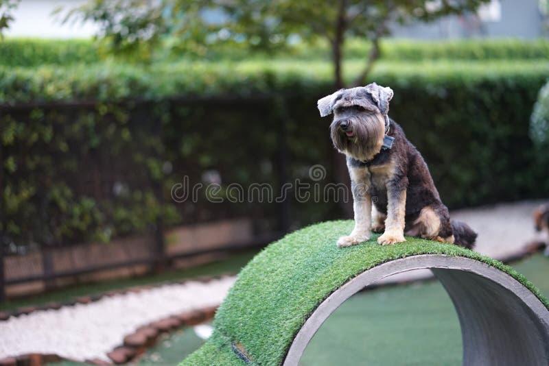 一点混合了在具体木盆的品种狗狗愉快的开会 免版税库存图片