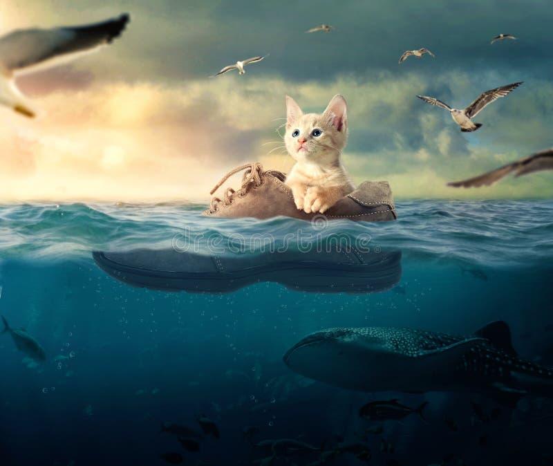 一点漂浮在他的小船起动的小猫 免版税图库摄影