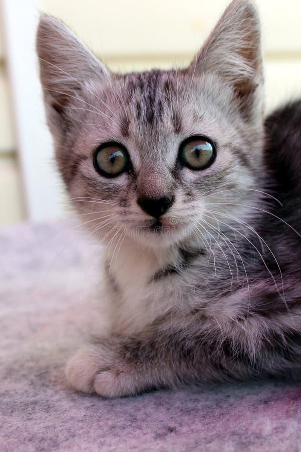一点灰色逗人喜爱的小的小猫坐并且看与他的大眼睛 库存图片