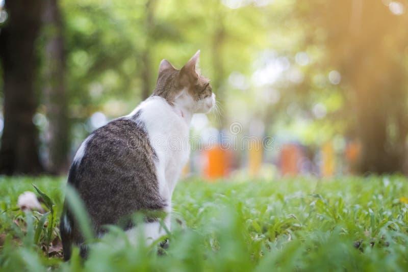 一点猫 免版税图库摄影