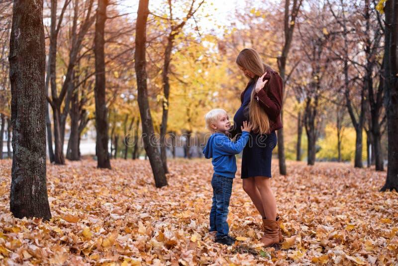 一点白肤金发的男孩拥抱他怀孕的妈妈的腹部 背景的秋天公园 库存图片