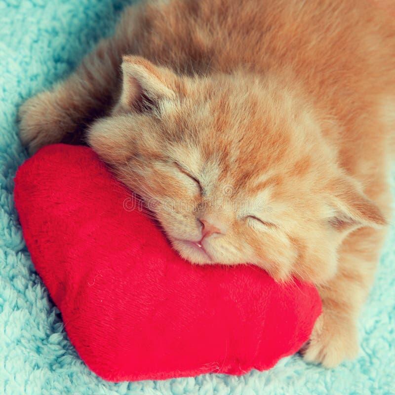 一点睡觉在红色枕头的小猫 免版税库存图片