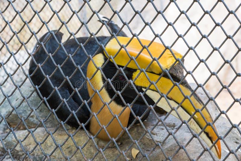 一点秃鹳在动物园里 图库摄影