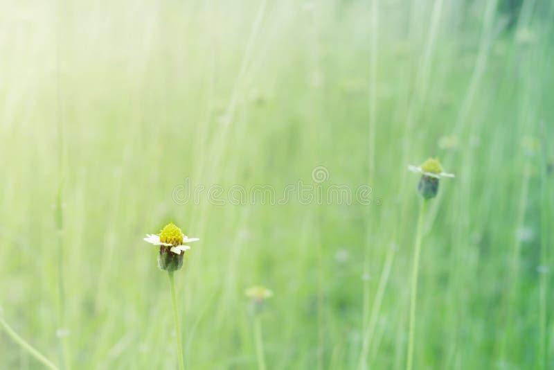 一点草花在草甸 免版税库存图片