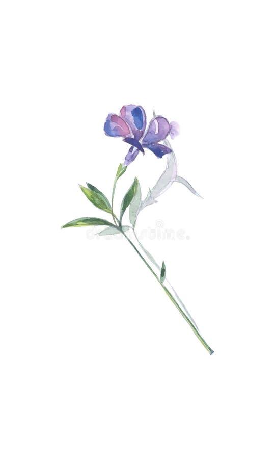 一点荔枝螺蓝色花,长春蔓未成年人 皇族释放例证
