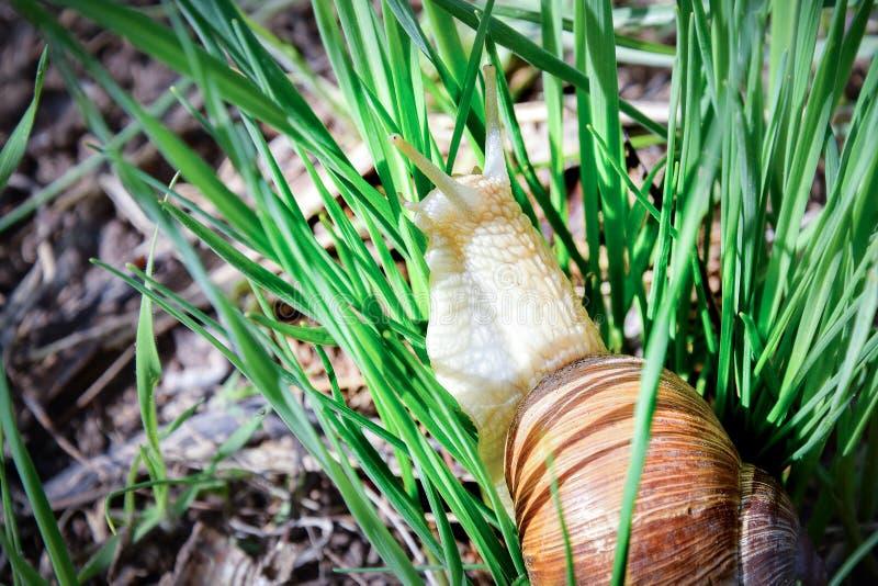 一点蜗牛旅客 库存图片