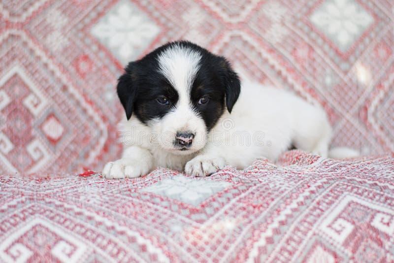 一点街道无家可归的逗人喜爱的蓬松狗小狗白色黑色 免版税图库摄影