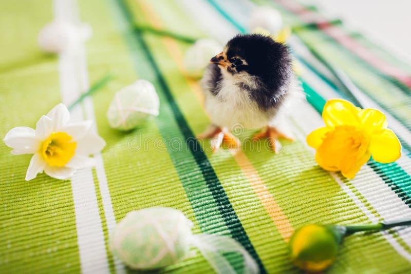 复活节鸡 一点走在花和复活节彩蛋中的黑小鸡 免版税图库摄影