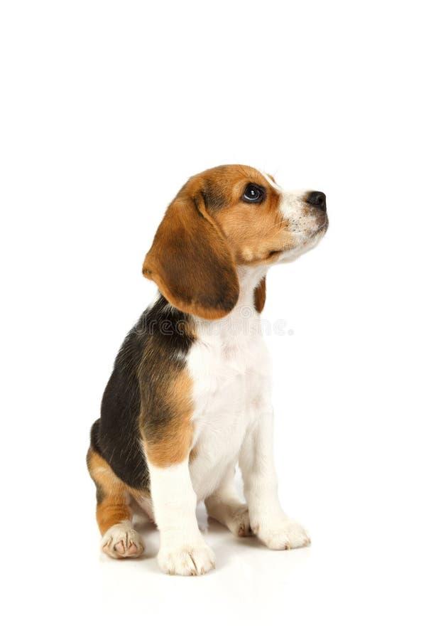一点逗人喜爱的狗开会 库存照片