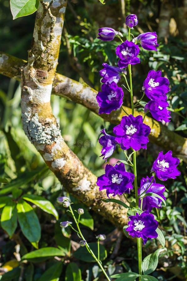 一点紫罗兰色花 库存照片