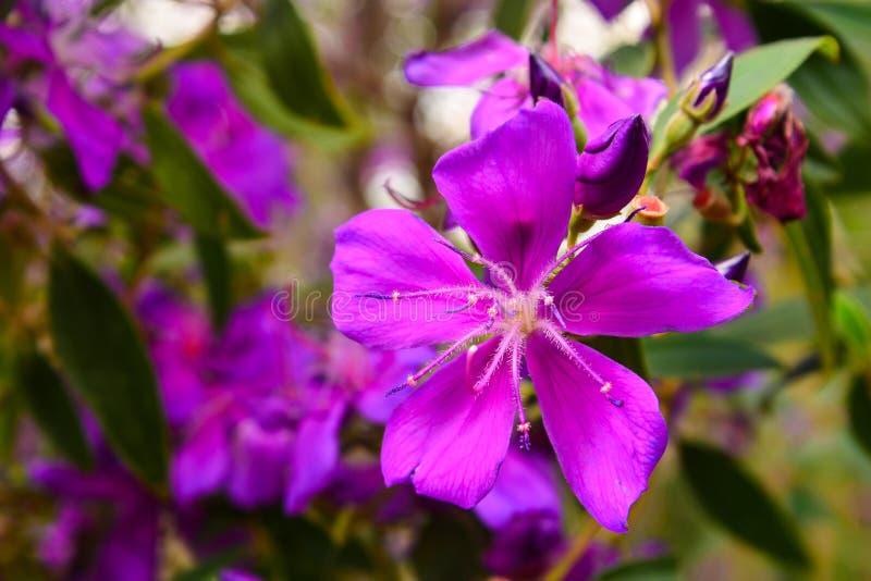 一点紫色花在庭院里 免版税库存照片