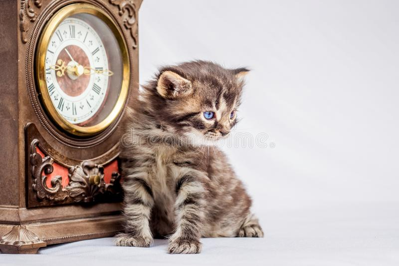 一点ckitten在古老时钟附近坐 记录时间 Ol 库存图片