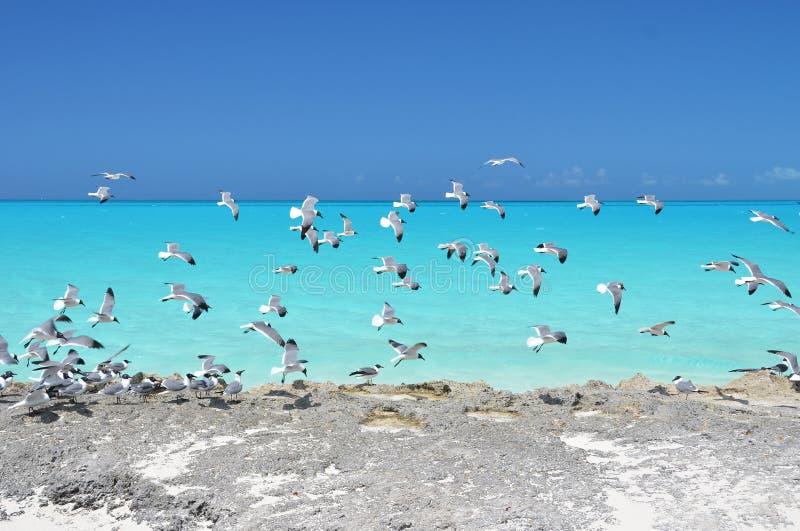 一点Exuma,巴哈马 免版税库存图片