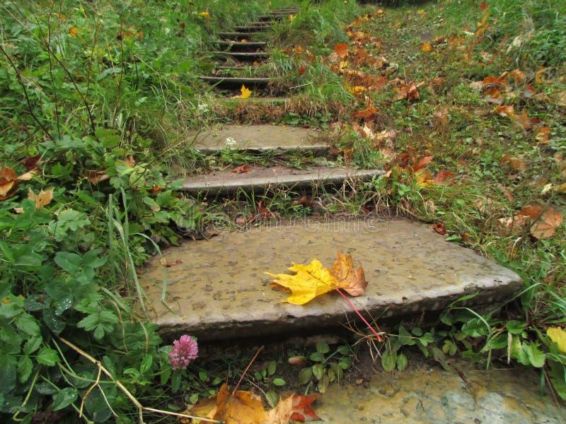 一片下落的枫叶在一个湿老狭窄的具体楼梯说谎 免版税库存照片