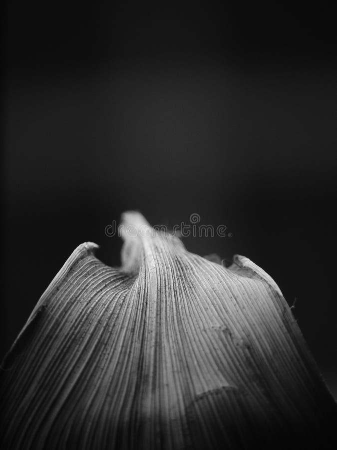 一片叶子的黑白图象在可看见一黑的背景和的渐晕的 免版税库存图片