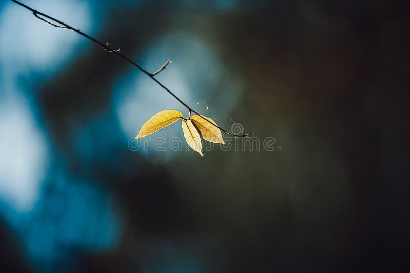 一片叶子 免版税图库摄影