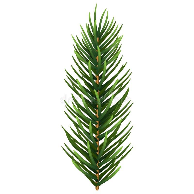 一片唯一现实云杉或杉木分支叶子 也corel凹道例证向量 库存例证