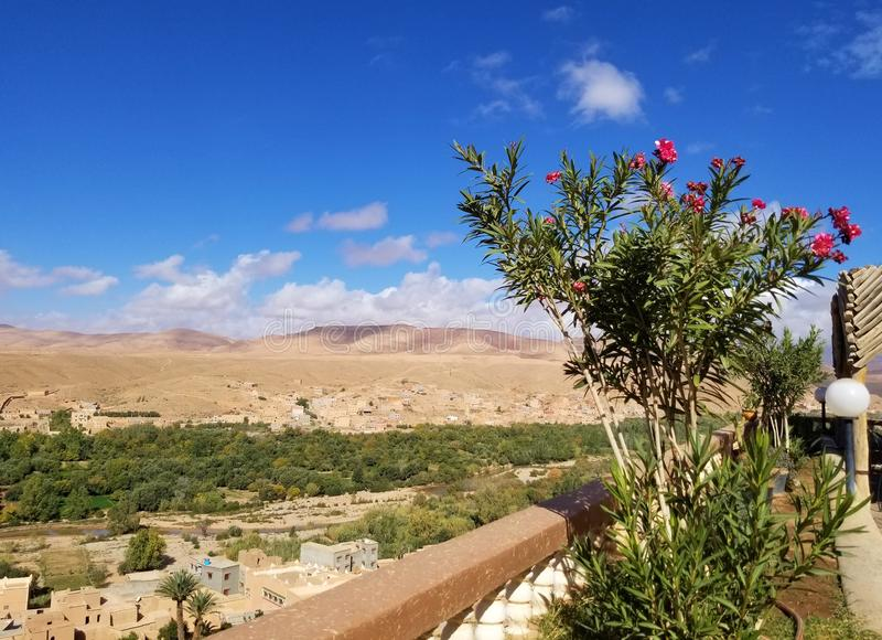 一片小的绿洲在沙漠 免版税库存照片