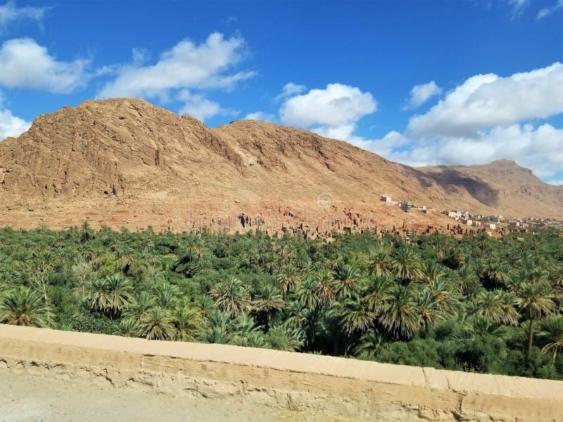 一片小的绿洲在沙漠 免版税图库摄影