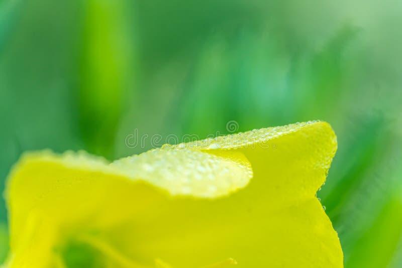 一片满地露水的早晨叶子 免版税库存照片
