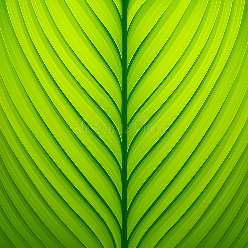 一片绿色叶子的纹理 库存例证