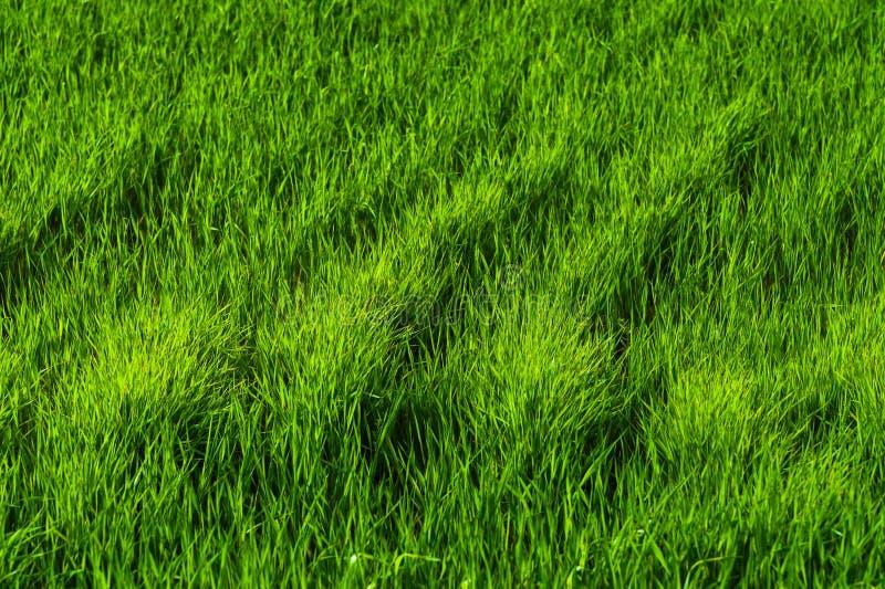 勃勃_download 一片绿色水多的草地的背景与波动图式的从风 春天生气勃勃