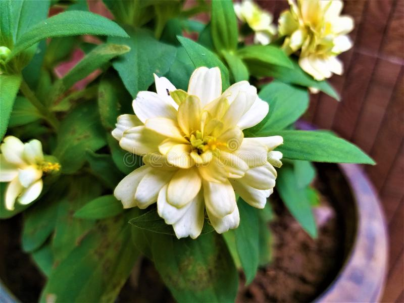 一片美丽的轻淡黄色花&绿色叶子 免版税库存图片