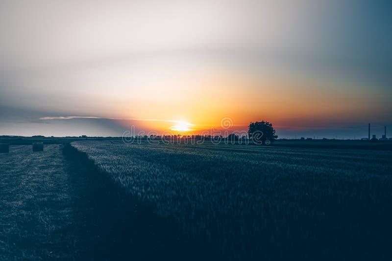 一片美好的草地的宽射击和在日落的一棵树与令人惊讶的云彩和太阳 免版税库存图片