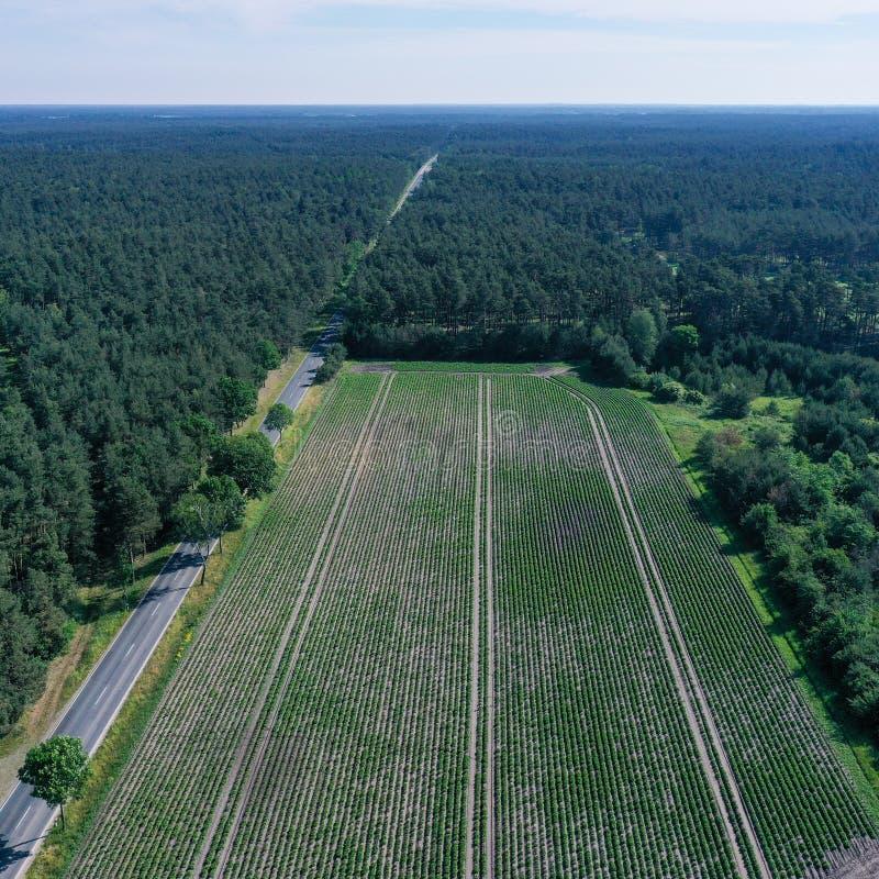 一片长方形,耕地的航空摄影在森林和一条死的平直的涂柏油的乡下公路之间的从更加了不起的高度, 图库摄影