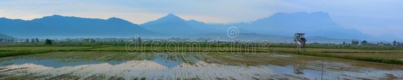 一片稻田的全景与京那巴鲁山的在沙巴,马来西亚 库存照片