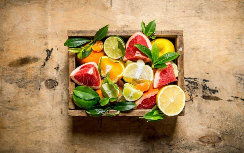 一箱柑桔-葡萄柚、桔子、蜜桔、柠檬、石灰和叶子 免版税库存照片