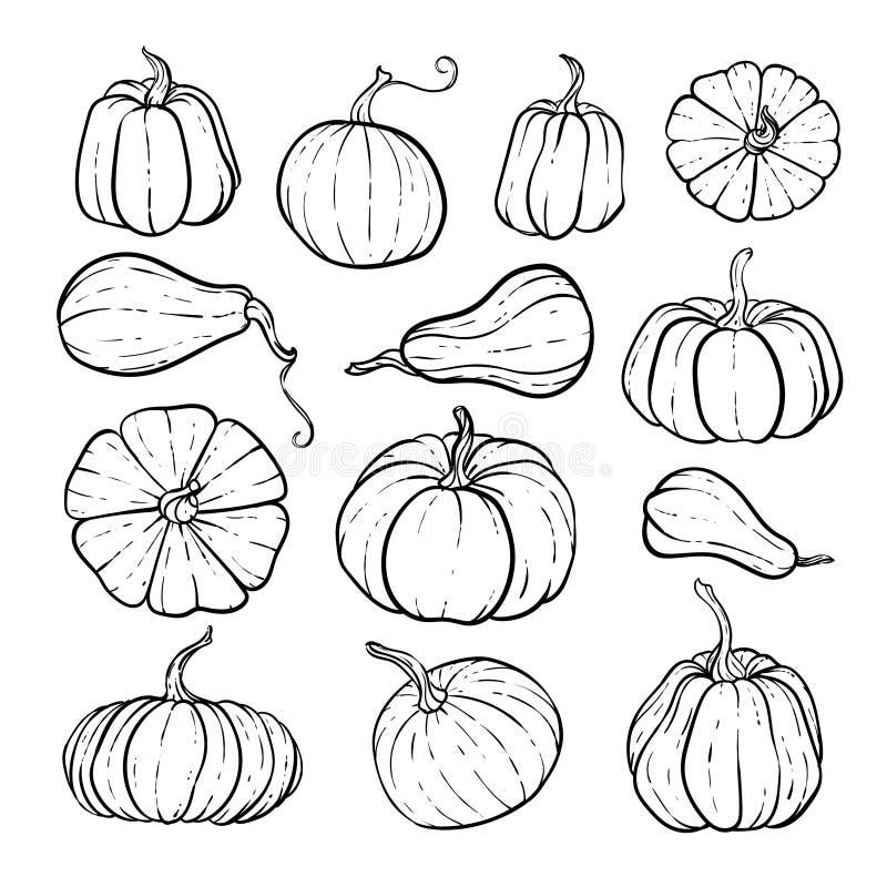 一组装饰性黑白南瓜 手绘草图矢量图秋图 感恩节,万圣节 皇族释放例证