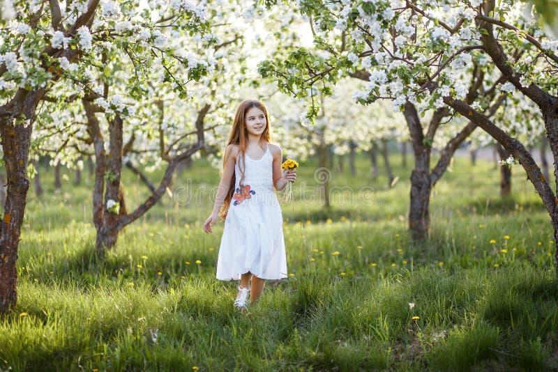 一美丽的少女的画象有蓝眼睛的在白色礼服在有blosoming在日落的苹果树的庭院里 免版税图库摄影