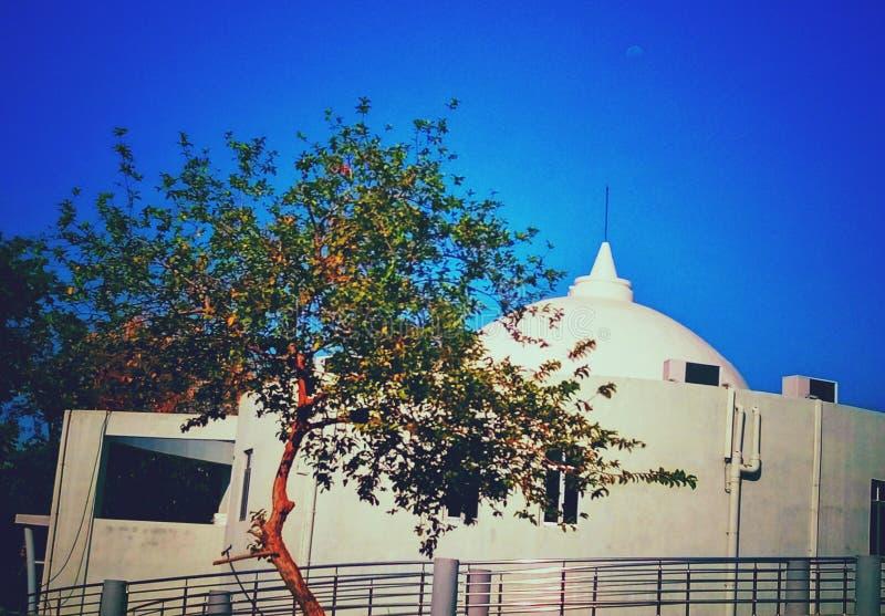 一美好builiding与在前景的一棵有一点弯的树 免版税库存照片
