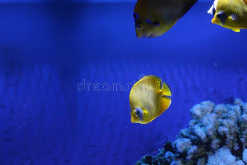 一群不同颜色的鱼 图库摄影