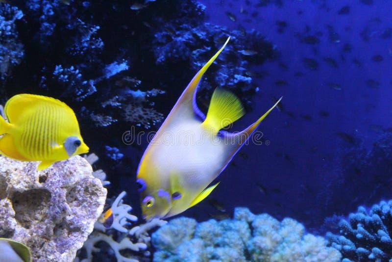 一群不同颜色的鱼 库存照片