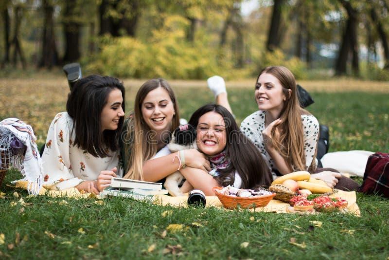 一群年轻女性和狗野餐 库存照片