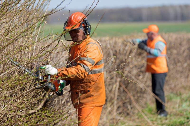 一致的切开的树篱的两名园丁工作者与靠气体发动的手飞剪机 免版税图库摄影