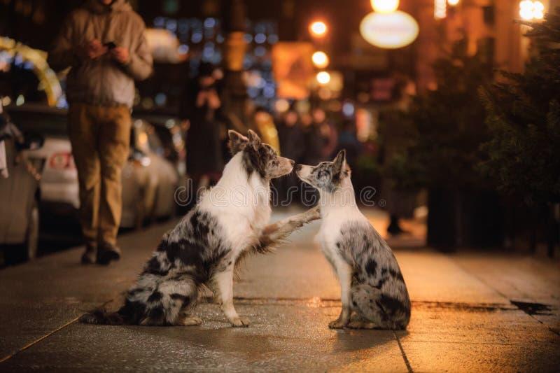 一起两条狗在城市在晚上 儿童友谊愉快的重点爱 免版税库存图片