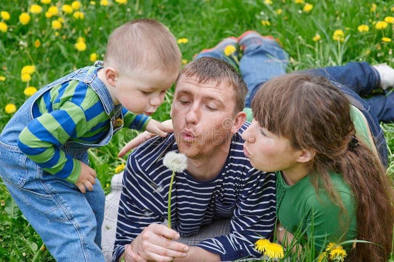 一起吹在一个蒲公英的妈妈爸爸和儿子在草甸 库存照片