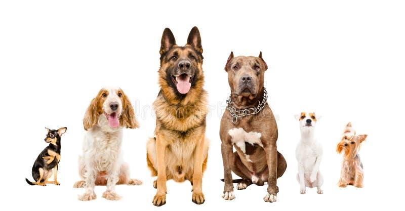 一起坐小组逗人喜爱的狗 库存图片