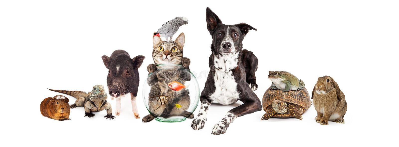 一起坐小组家养的宠物 免版税库存照片