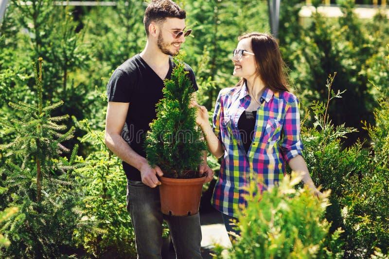 一起年轻夫妇身分,拿着有一棵小杉树的一个罐和在园艺中心看一棵植物 图库摄影