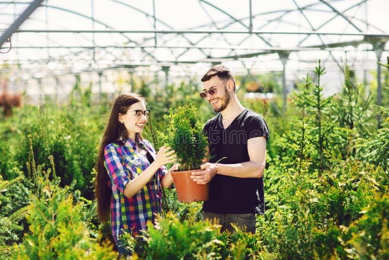 一起年轻夫妇身分,拿着有一棵小杉树的一个罐和在园艺中心看一棵植物 免版税库存照片