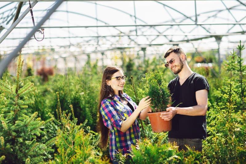 一起年轻夫妇身分,拿着有一棵小杉树的一个罐和在园艺中心看一棵植物 免版税库存图片